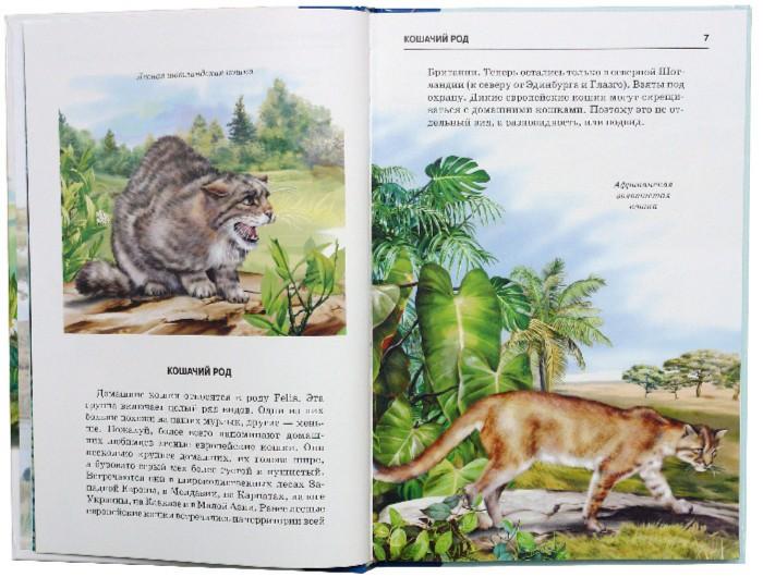 Иллюстрация 1 из 33 для Кошки - Сергей Афонькин   Лабиринт - книги. Источник: Лабиринт