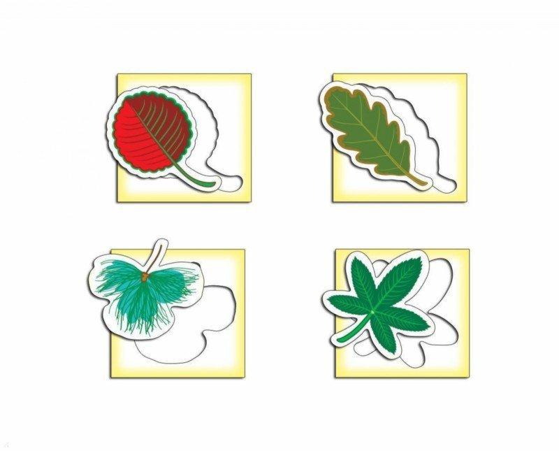 Иллюстрация 1 из 7 для Трафареты: Листья деревьев (1368) | Лабиринт - игрушки. Источник: Лабиринт