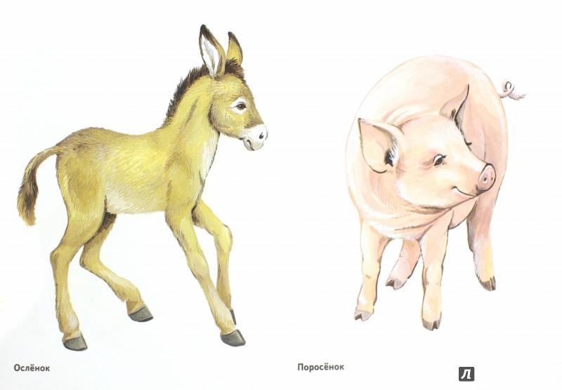 домашних картинки животных детеныши