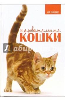 Очаровательные кошки