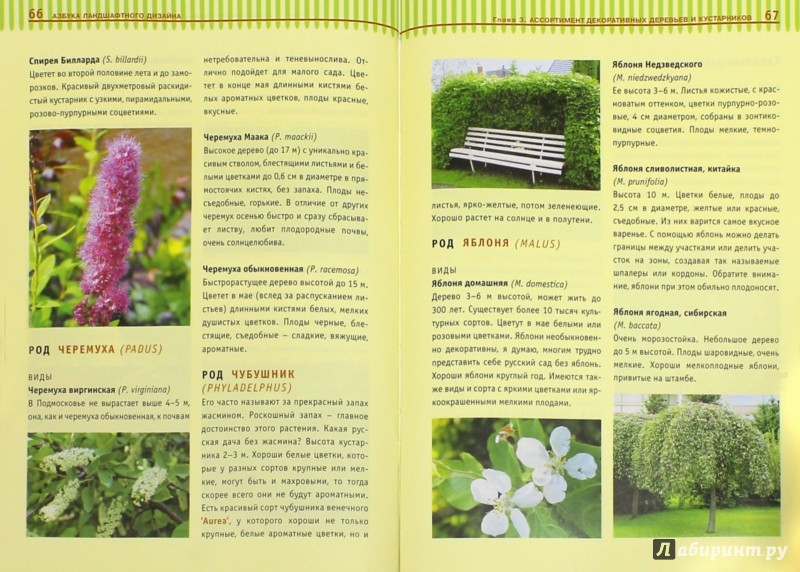 Иллюстрация 1 из 32 для Азбука ландшафтного дизайна - Татьяна Шиканян | Лабиринт - книги. Источник: Лабиринт