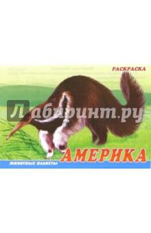 Животные Америки. Раскраска (М-014)