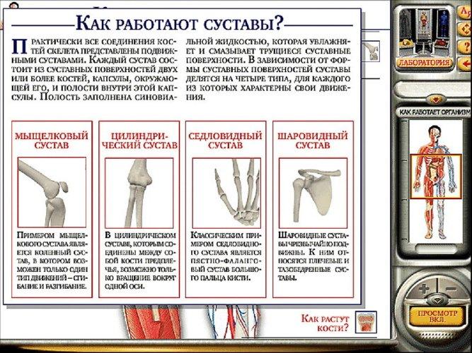 Иллюстрация 1 из 33 для Мое тело. Анатомия и физиология (CDpc)   Лабиринт - софт. Источник: Лабиринт