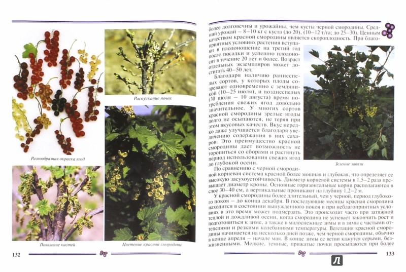 Иллюстрация 1 из 21 для Смородина. Пособие для садоводов-любителей - Ольга Аладина | Лабиринт - книги. Источник: Лабиринт