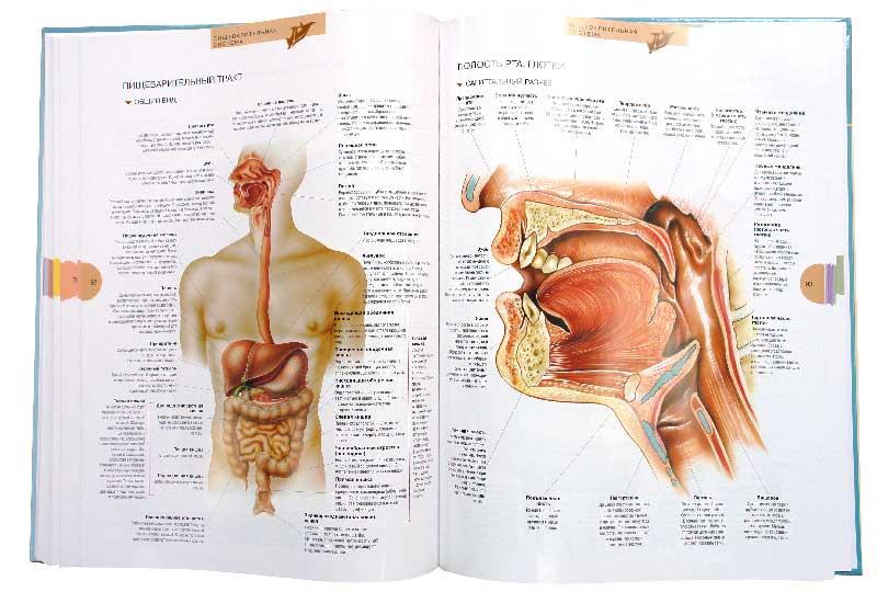 Анатомия зрелой вагины