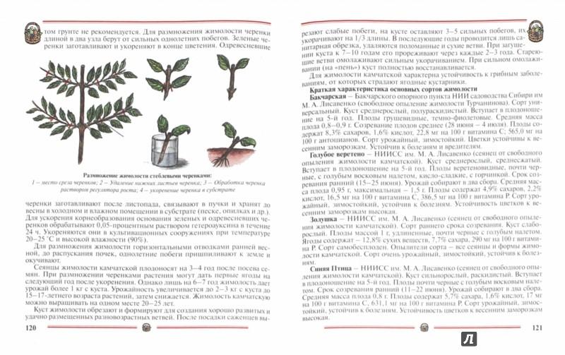 Иллюстрация 1 из 45 для Ранний урожай плодов, ягод. Пособие для садоводов-любителей - Александр Ракитин   Лабиринт - книги. Источник: Лабиринт