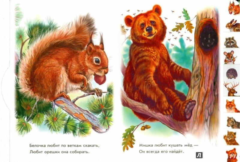 Иллюстрация 1 из 18 для В лесу - Олеся Квитка | Лабиринт - книги. Источник: Лабиринт