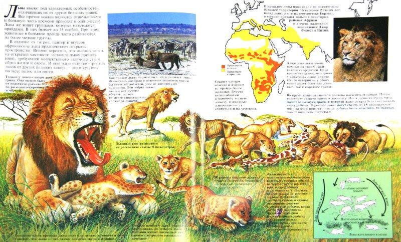 Иллюстрация 1 из 26 для Большие кошки - Джон Веско | Лабиринт - книги. Источник: Лабиринт