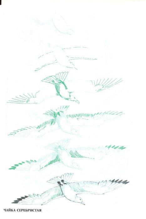 Иллюстрация 1 из 14 для Рисуем 50 птиц - Эймис, Д'Адамо | Лабиринт - книги. Источник: Лабиринт