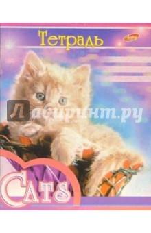 Тетрадь 48 листов, клетка 660-663 (Кошки)