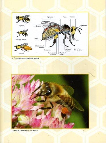 Иллюстрация 1 из 2 для Экспертиза продуктов пчеловодства. Качество и безопасность - Ивашевская, Лебедев, Рязанова, Позняковский | Лабиринт - книги. Источник: Лабиринт
