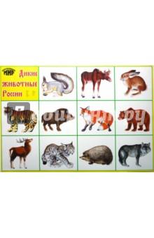 плакат - дикие животные