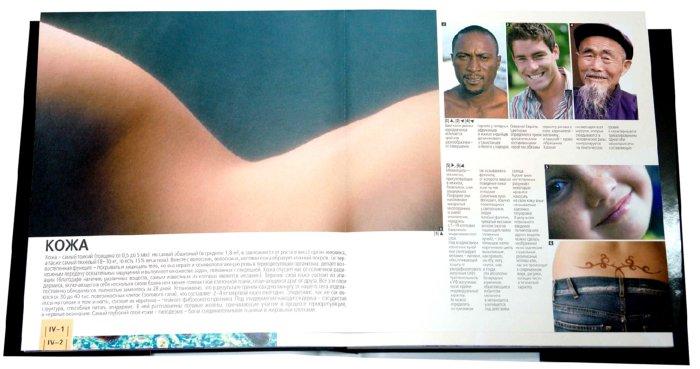 Иллюстрация 1 из 19 для Большой атлас анатомии человека - Пьерлуиджи Диано | Лабиринт - книги. Источник: Лабиринт
