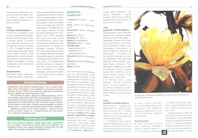 Иллюстрация 1 из 19 для Светолюбивые растения | Лабиринт - книги. Источник: Лабиринт