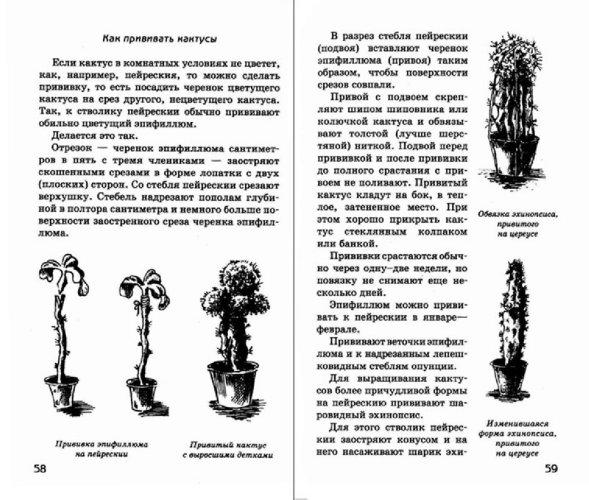 Иллюстрация 1 из 20 для Путешествие с домашними растениями - Николай Верзилин | Лабиринт - книги. Источник: Лабиринт