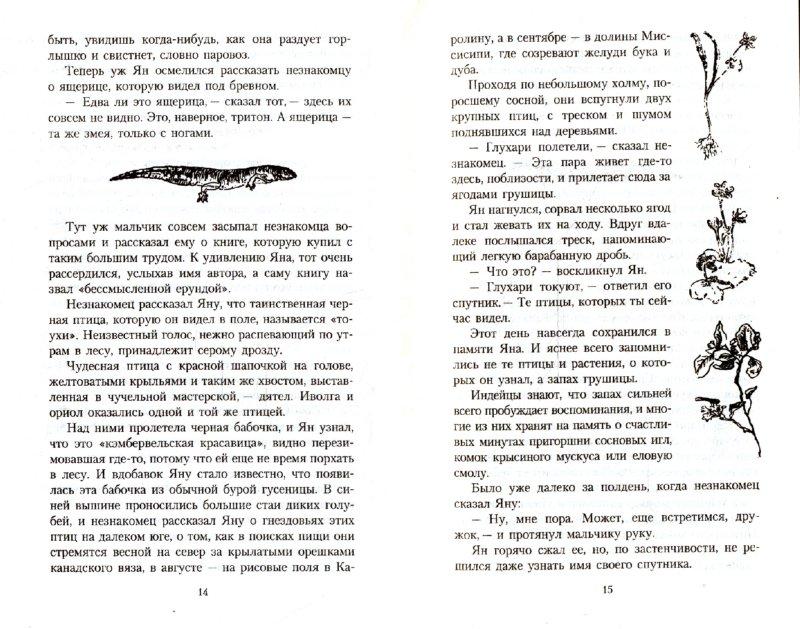 Иллюстрация 1 из 14 для Маленькие дикари - Эрнест Сетон-Томпсон   Лабиринт - книги. Источник: Лабиринт