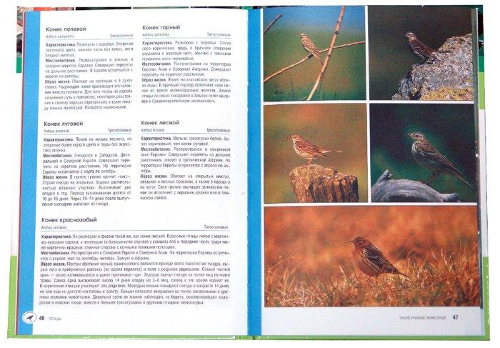 Иллюстрация 1 из 6 для Такие разные животные - Рихарц Клаус | Лабиринт - книги. Источник: Лабиринт