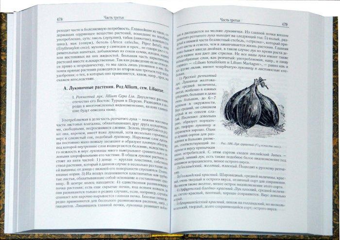 Иллюстрация 1 из 16 для Русский огород, питомник и плодовый сад - Рихард Шредер | Лабиринт - книги. Источник: Лабиринт