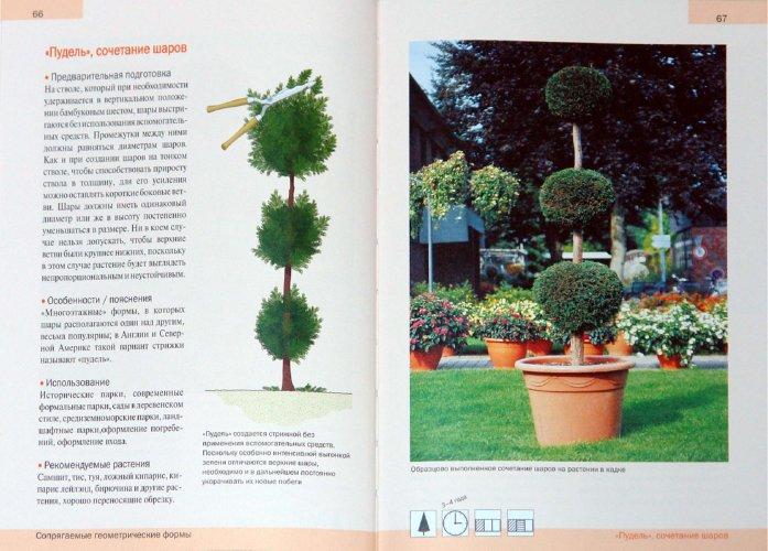 Иллюстрация 1 из 3 для Фигурная стрижка деревьев. Формы, методы, уход - Генрих Бельц   Лабиринт - книги. Источник: Лабиринт