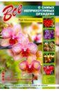 Все о самых неприхотливых орхидеях