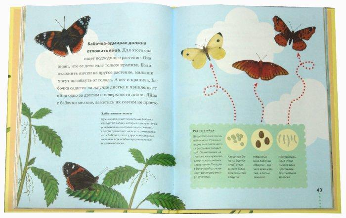 Иллюстрация 1 из 37 для Пчелы, бабочки, стрекозы - Тинг Моррис   Лабиринт - книги. Источник: Лабиринт