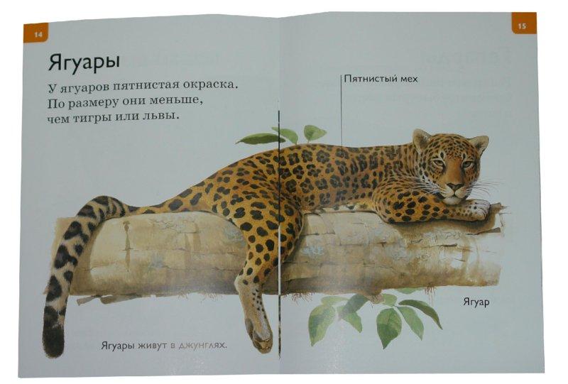 Иллюстрация 1 из 17 для Большие кошки - Дениз Райан   Лабиринт - книги. Источник: Лабиринт