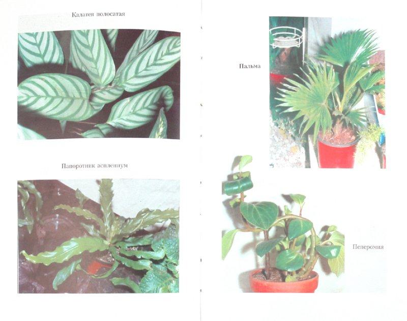 Иллюстрация 1 из 8 для Азбука цветовода - Мария Цветкова-Верниченко | Лабиринт - книги. Источник: Лабиринт