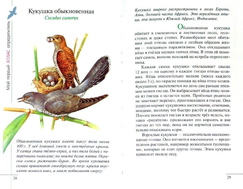 Иллюстрация 1 из 39 для Птицы леса - Бровкина, Сивоглазов | Лабиринт - книги. Источник: Лабиринт