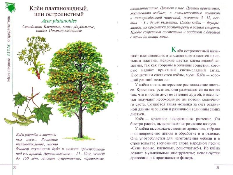 Иллюстрация 1 из 16 для Атлас: Растения леса (3220) - Козлова, Сивоглазов   Лабиринт - книги. Источник: Лабиринт