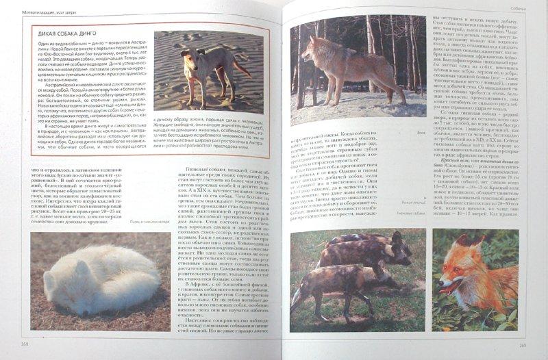 Иллюстрация 1 из 20 для Энциклопедия для детей. Птицы и звери | Лабиринт - книги. Источник: Лабиринт