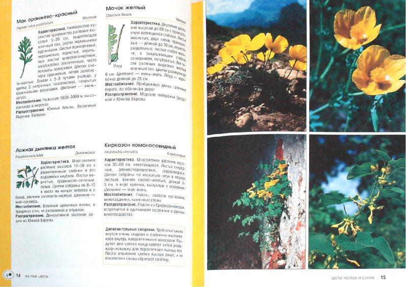 Иллюстрация 1 из 10 для Цветы желтые и синие - Бруно Кремер   Лабиринт - книги. Источник: Лабиринт