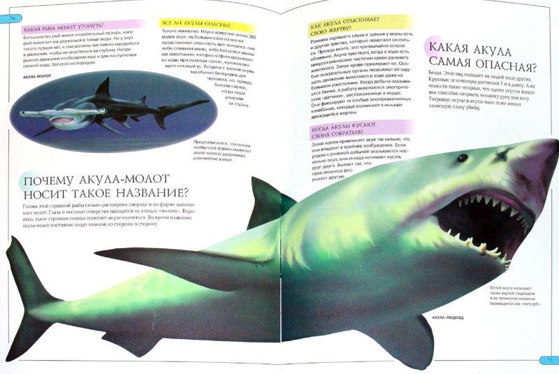 Иллюстрация 1 из 24 для Животные. Моя первая детская энциклопедия в вопросах и ответах   Лабиринт - книги. Источник: Лабиринт