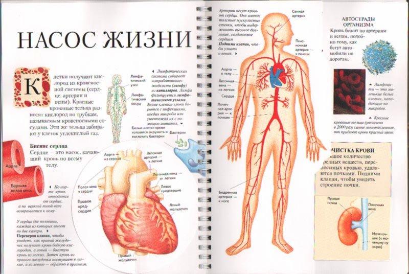 Иллюстрация 1 из 3 для Анатомия человека - Ник Грехам | Лабиринт - книги. Источник: Лабиринт