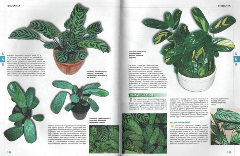 Иллюстрация 1 из 15 для Самая полная энциклопедия комнатных растений   Лабиринт - книги. Источник: Лабиринт