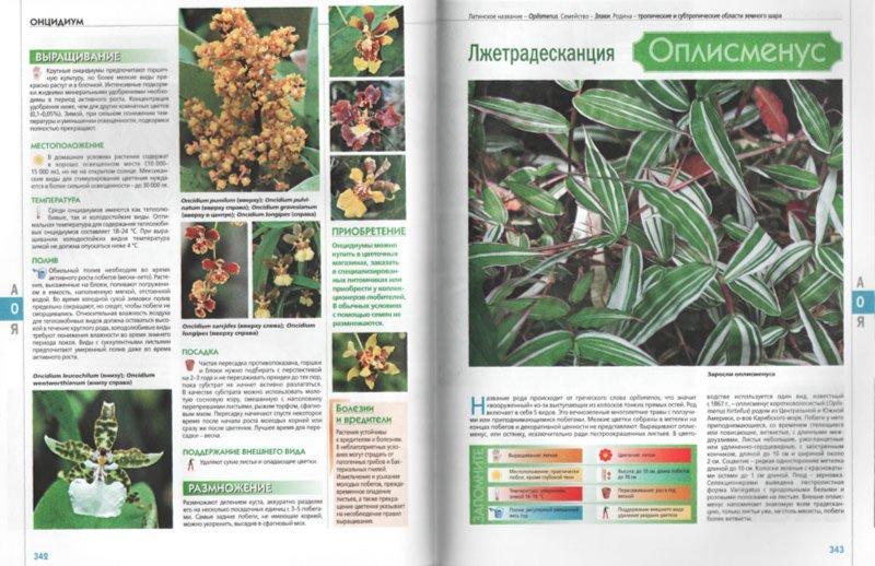 Энциклопедия комнатных растений с фото