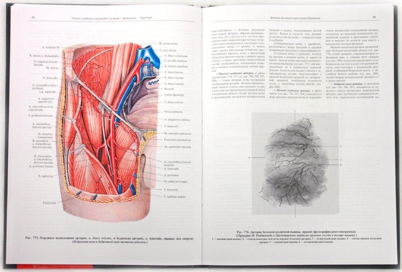 Иллюстрация 1 из 36 для Атлас анатомии человека. В 4-х томах. Том 3. Учение о сосудах и лимфоидных органах - Синельников, Синельников, Синельников | Лабиринт - книги. Источник: Лабиринт