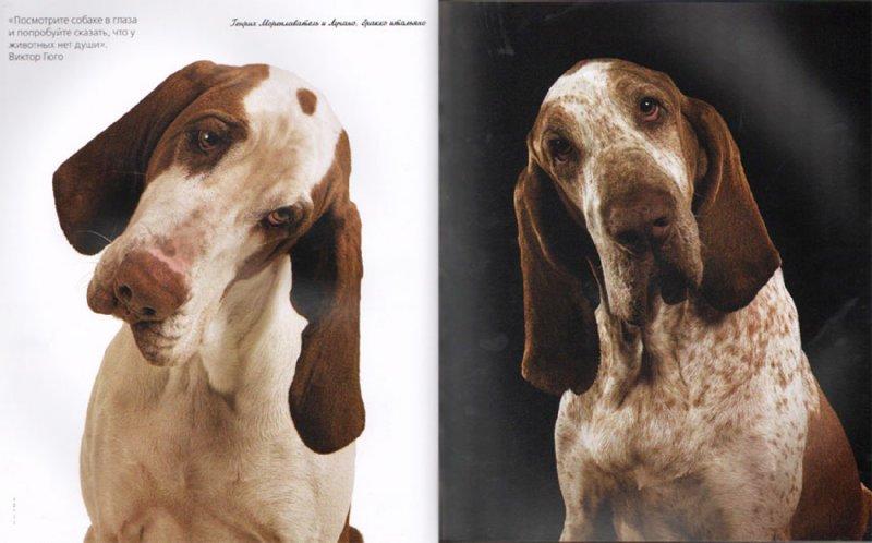 Иллюстрация 1 из 20 для Жизнь собак - Громис ди Трана Катерина | Лабиринт - книги. Источник: Лабиринт