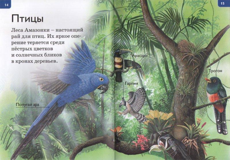 Иллюстрация 1 из 23 для Джунгли - Дениз Райан | Лабиринт - книги. Источник: Лабиринт