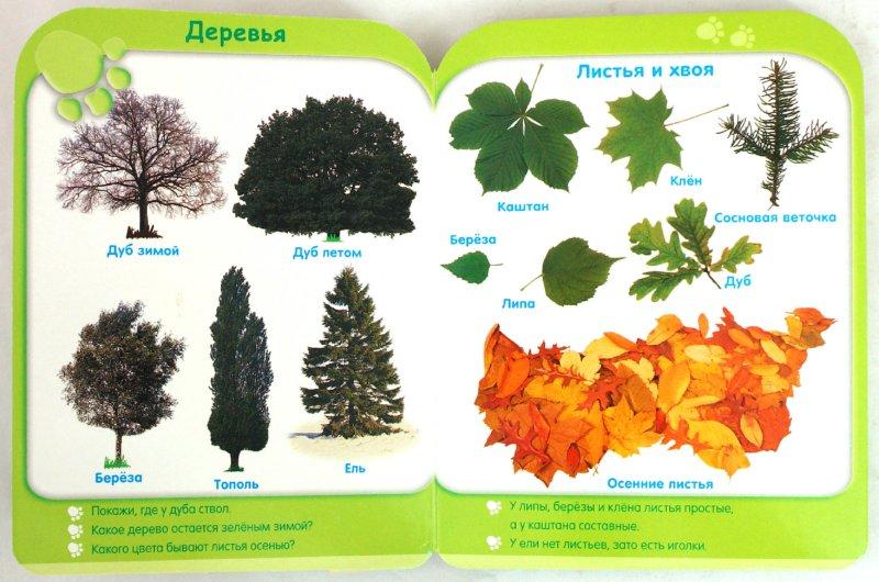 Иллюстрация 1 из 27 для Природа (от 3-х лет) | Лабиринт - книги. Источник: Лабиринт
