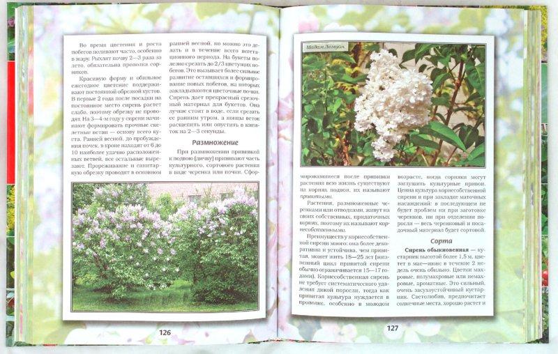 Иллюстрация 1 из 9 для Декоративные кустарники,деревья и цветы - Октябрина Ганичкина | Лабиринт - книги. Источник: Лабиринт