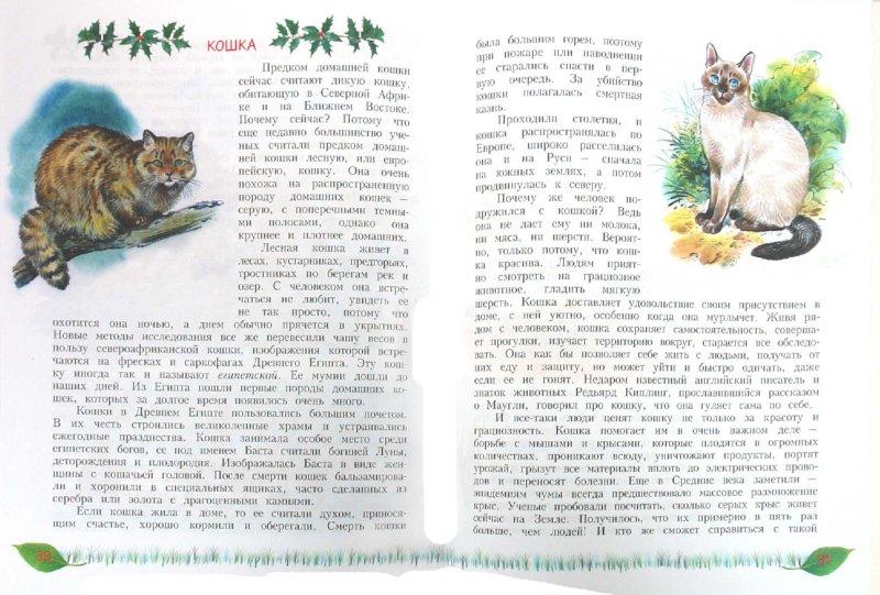 Иллюстрация 1 из 22 для Домашние животные - друзья и помощники человека: книга для чтения детям - Александр Тамбиев | Лабиринт - книги. Источник: Лабиринт