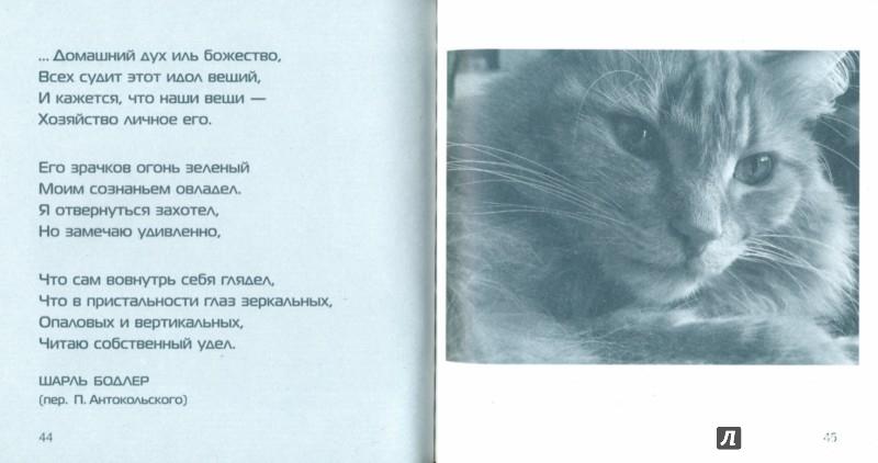 Иллюстрация 1 из 5 для Люди заводят собак, а кошки людей | Лабиринт - книги. Источник: Лабиринт