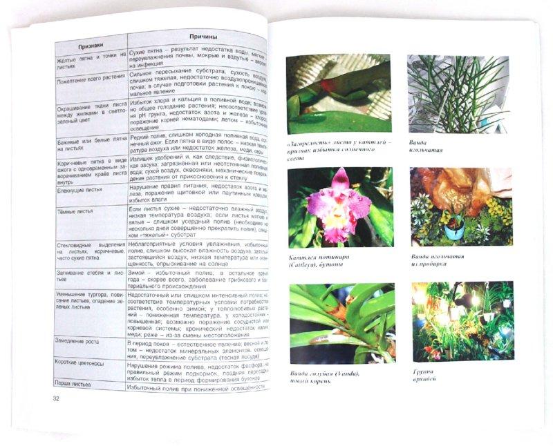 Иллюстрация 1 из 14 для Флорариум. Тропические растения дома - Ольга Перепелова | Лабиринт - книги. Источник: Лабиринт
