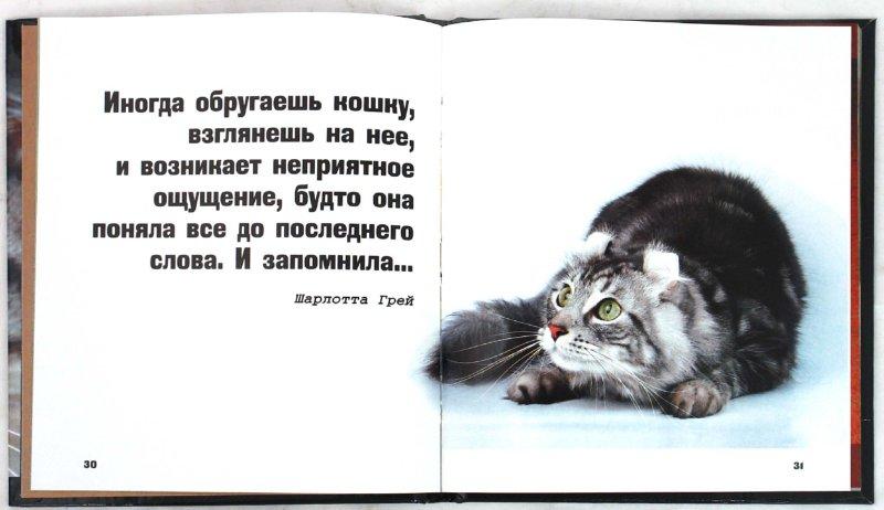 Иллюстрация 1 из 31 для Кошки - это духи, спустившиеся на землю | Лабиринт - книги. Источник: Лабиринт