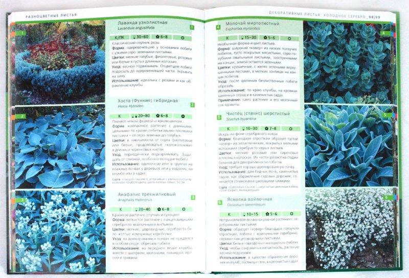 Иллюстрация 1 из 13 для Идеальные растения для вашего сада - Хаген, Борстель | Лабиринт - книги. Источник: Лабиринт