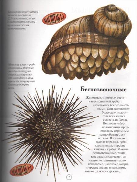 Иллюстрация 1 из 17 для Акулы и другие обитатели подводного мира - Дэниел Гилпин | Лабиринт - книги. Источник: Лабиринт