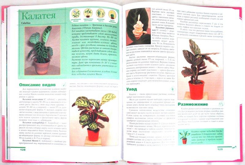 Иллюстрация 1 из 10 для Комнатные растения - Лариса Бурлуцкая | Лабиринт - книги. Источник: Лабиринт