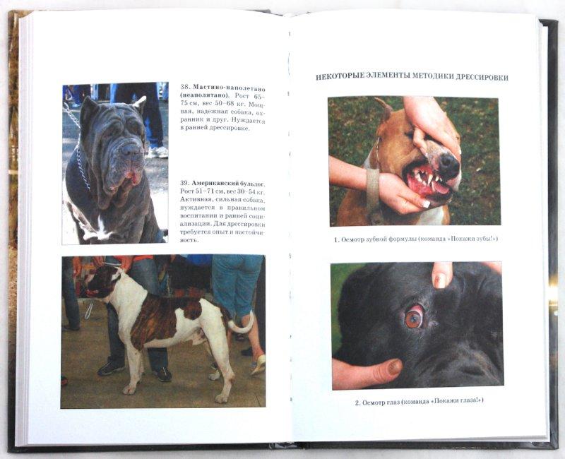 Иллюстрация 1 из 13 для Дрессировка собак неслужебных пород. Защита хозяина и личного имущества - Вадим Пустовойтов   Лабиринт - книги. Источник: Лабиринт