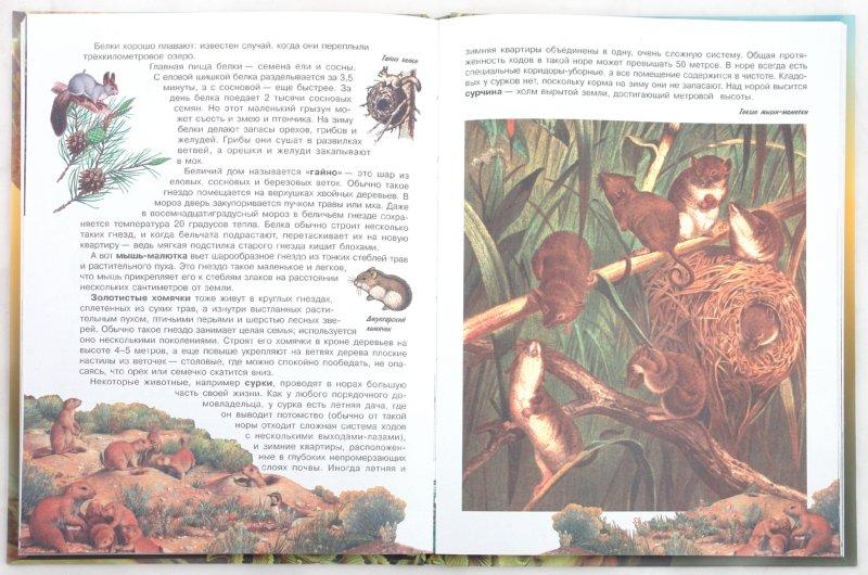 Иллюстрация 1 из 6 для Звери - Марина Корнилова | Лабиринт - книги. Источник: Лабиринт