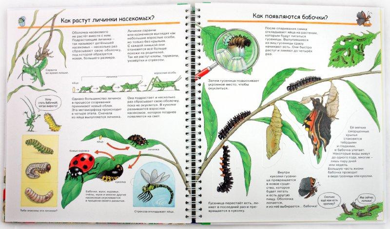 Иллюстрация 1 из 41 для Кто такие насекомые - Ангела Вайнхольд | Лабиринт - книги. Источник: Лабиринт